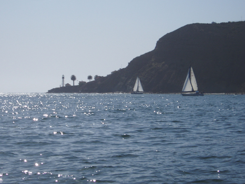 Photo album for Point loma fish count